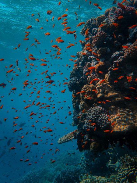 Rode Zee