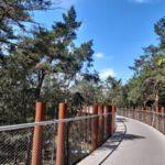Fietsen door de bomen in Limburg